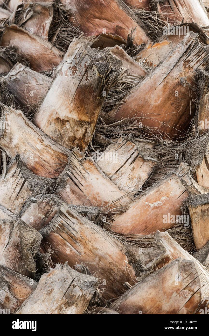 Corteza de textura de madera de palmera con ramas entrelazadas Imagen De Stock