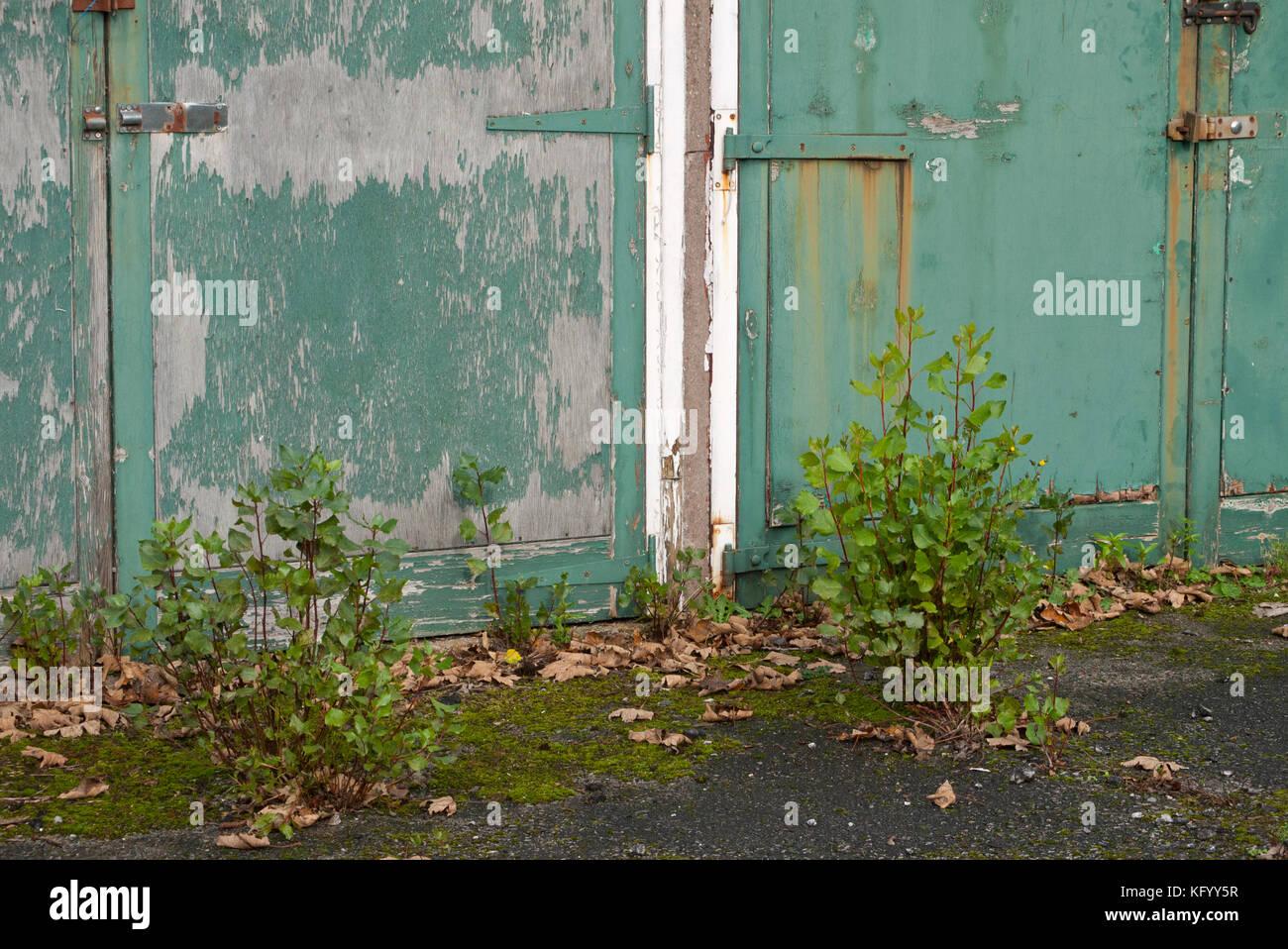 Las plantas y arbustos que crecen fuera de garajes en desuso, Inglaterra, Reino Unido. Foto de stock