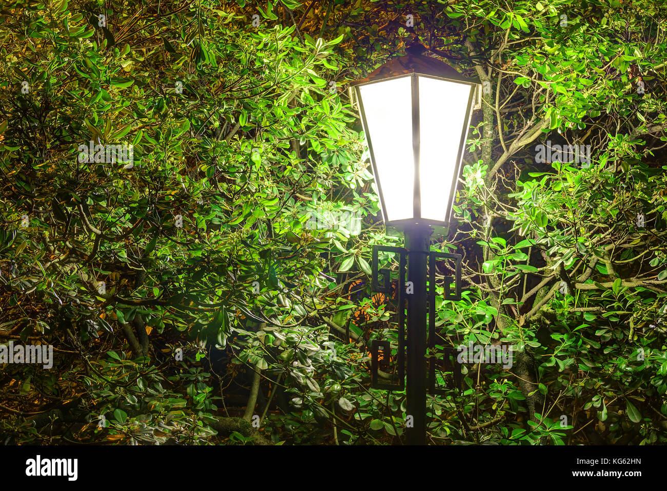 Calle la luz luminosa en el fondo del follaje del árbol de magnolia en la noche Imagen De Stock