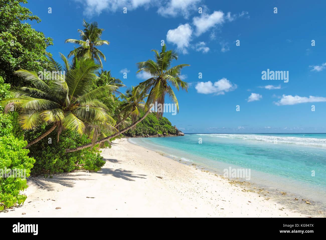 playa tropical Imagen De Stock