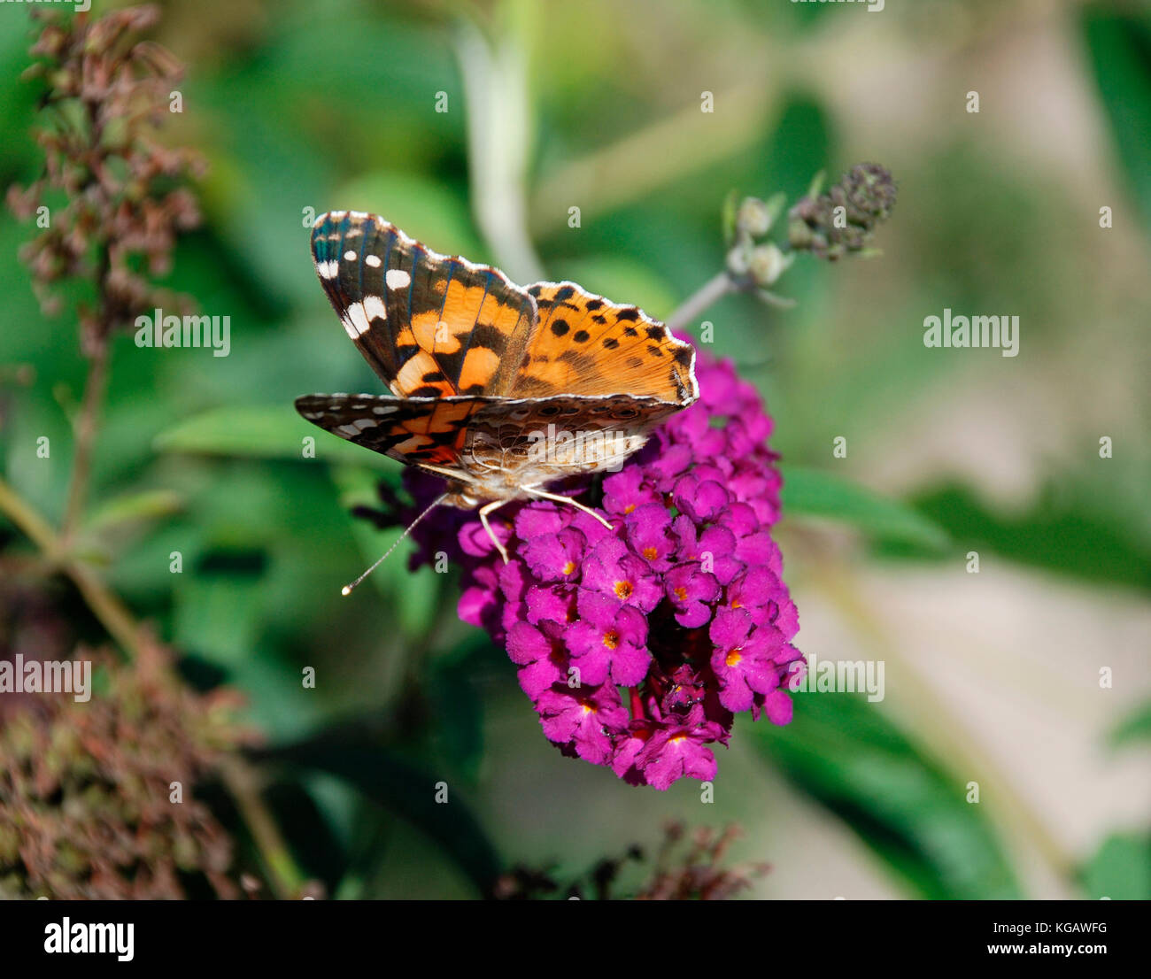 Small Orange With Green Leaves Imágenes De Stock & Small Orange With ...