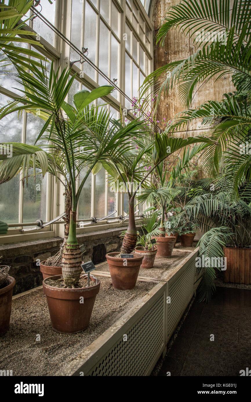 El Jardín Botánico Nacional, Dublín, Irlanda. Foto de stock