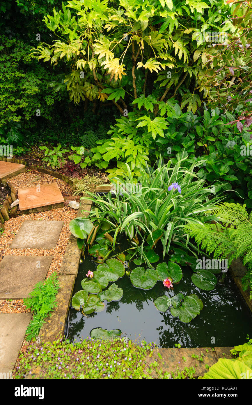 Pequeño estanque de jardín en un jardín exótico en Plymouth, Reino Unido, rodeado por grandes hojas de plantas de follaje Foto de stock