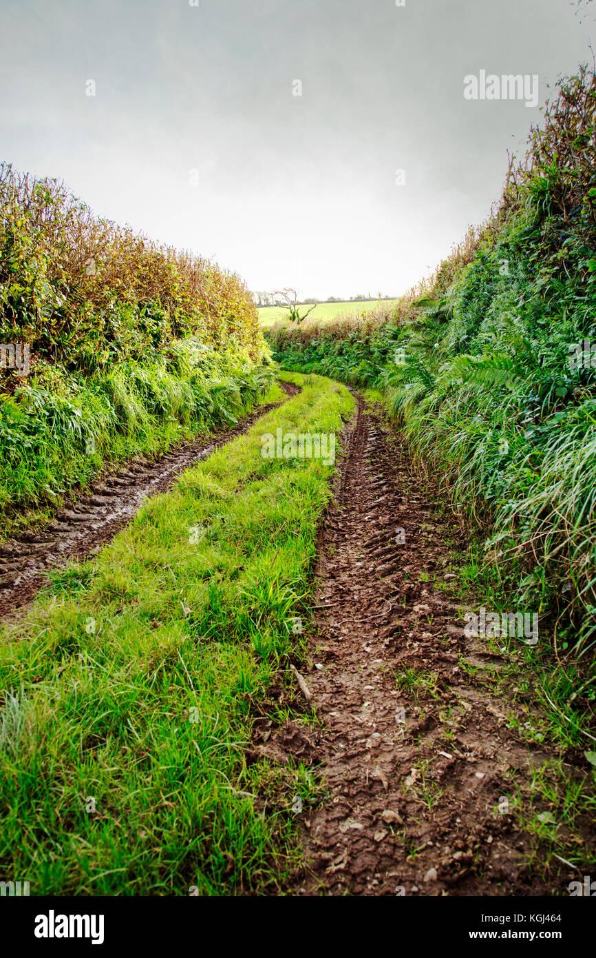 Sección de la manera antigua trackway santa. Foto de stock