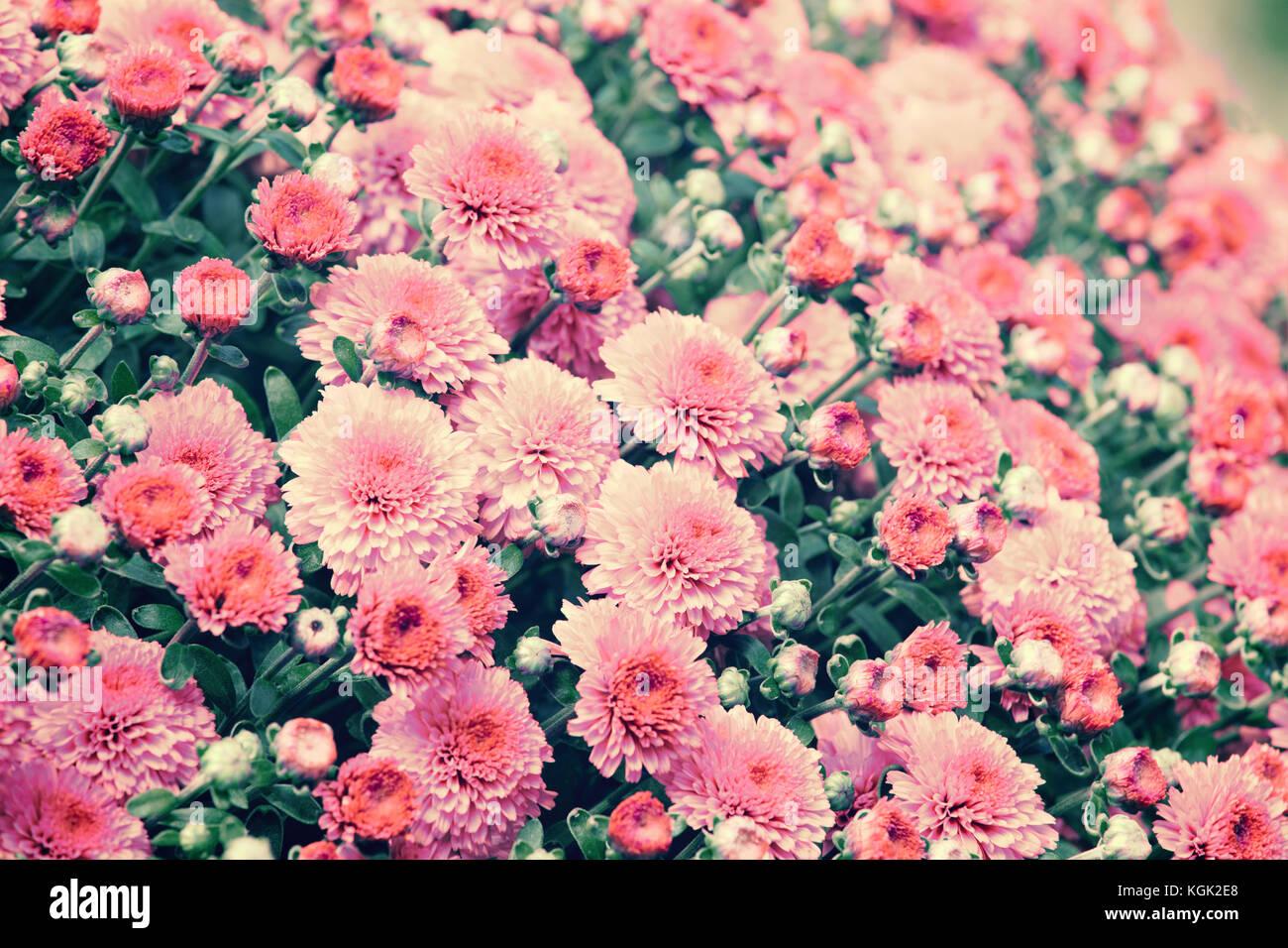Fondo De Flores Vintage: Fondo De Flores Vintage Foto & Imagen De Stock: 165146864