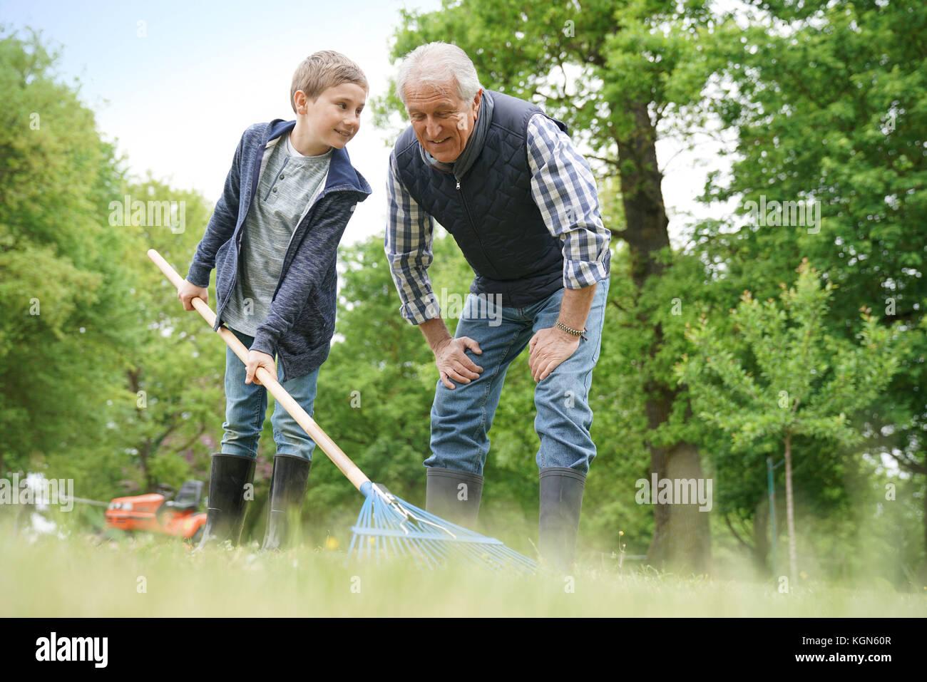 Limpieza grandkid abuelo con jardín con rastrillo Imagen De Stock