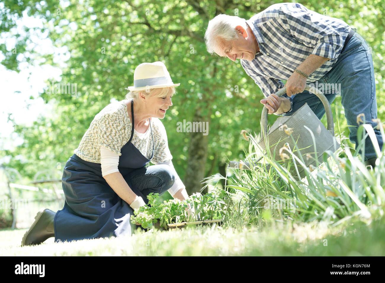 Las parejas ancianas jardinería juntos Imagen De Stock