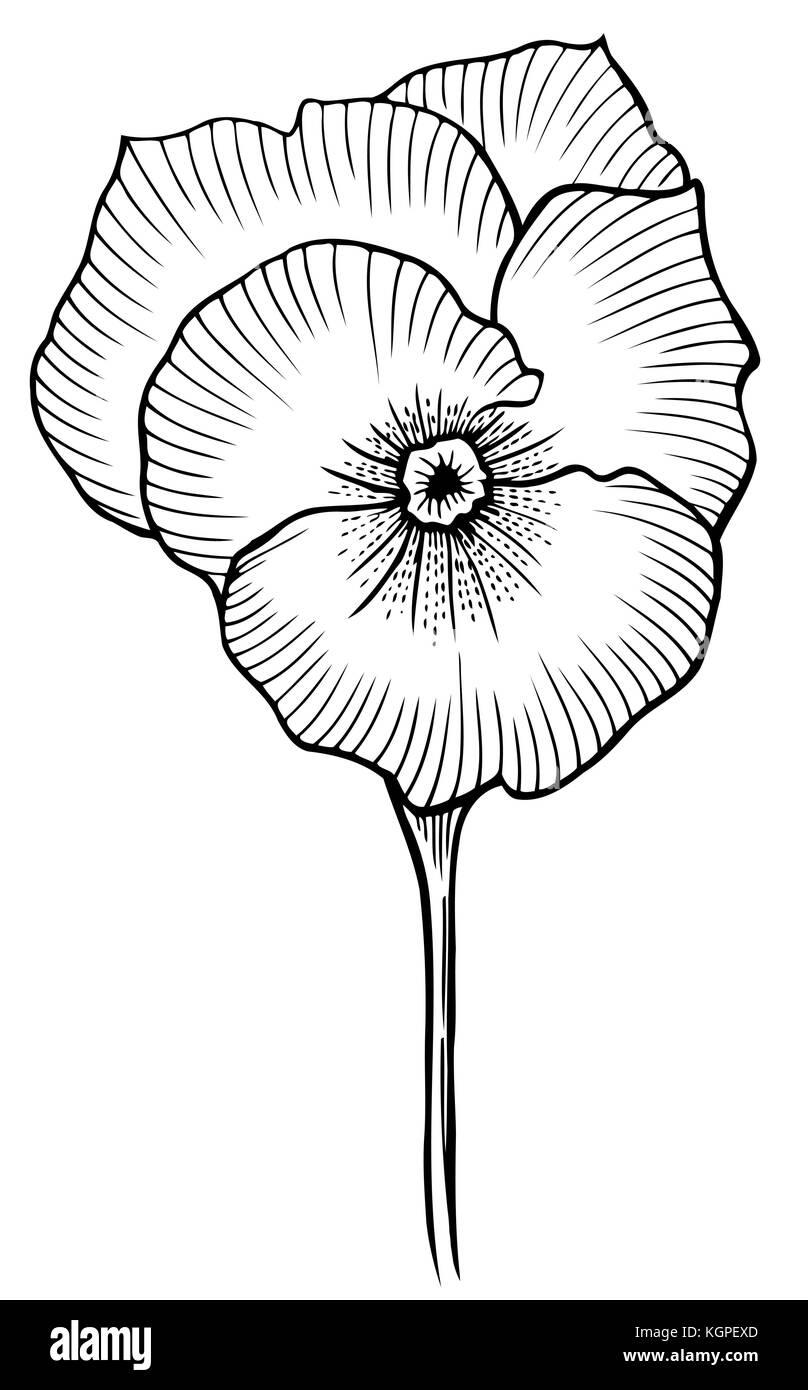 Vintage Flor Ilustracion En Blanco Y Negro En El Estilo De Los