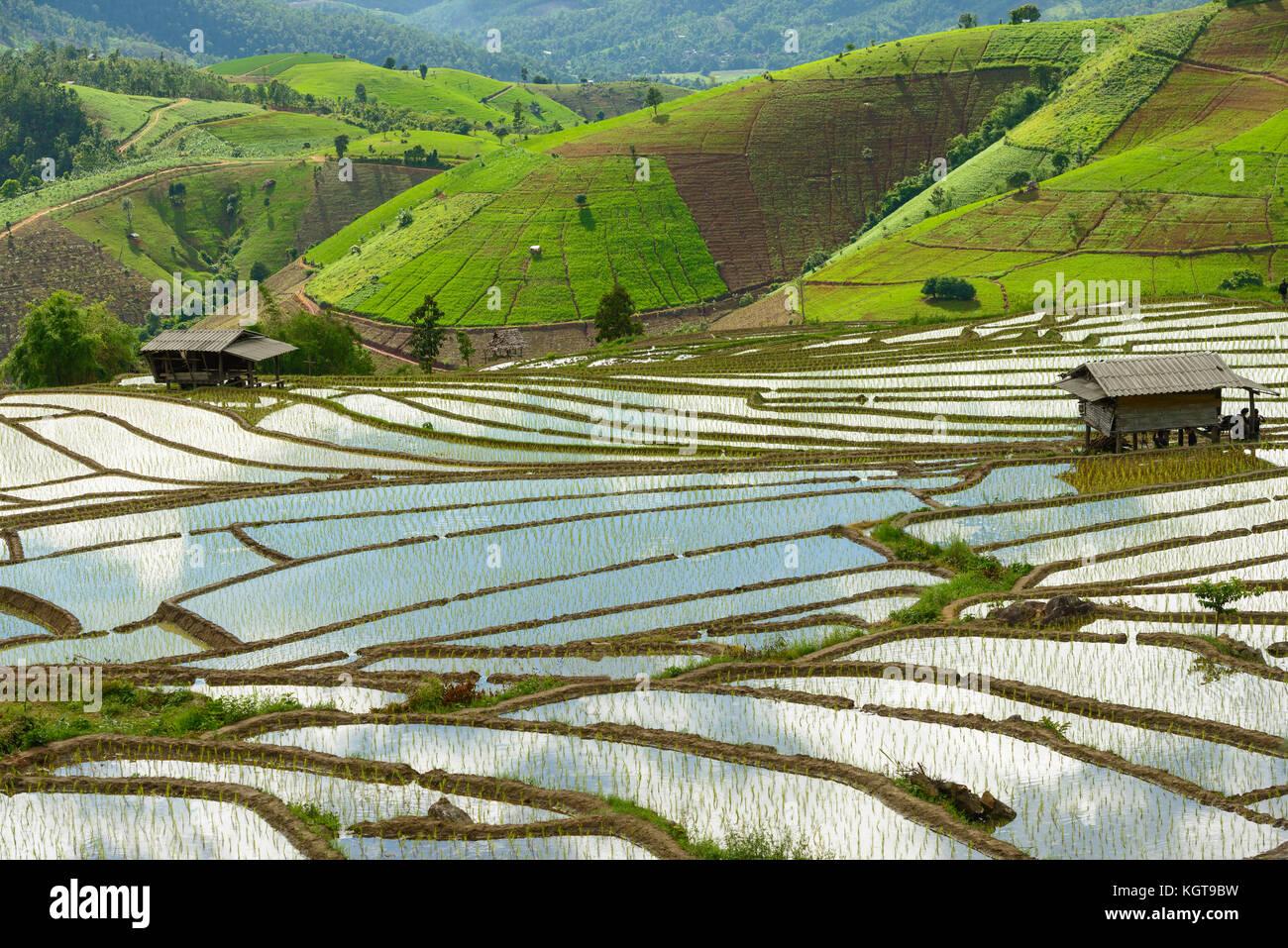Campos De Arroz En Terrazas En Tailandia Foto Imagen De