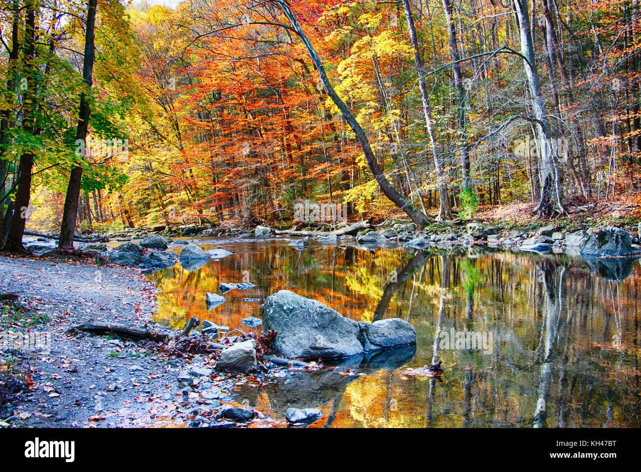 El río negro durante el pico de la caída del follaje, Ken lockwood State Park, New Jersey Foto de stock