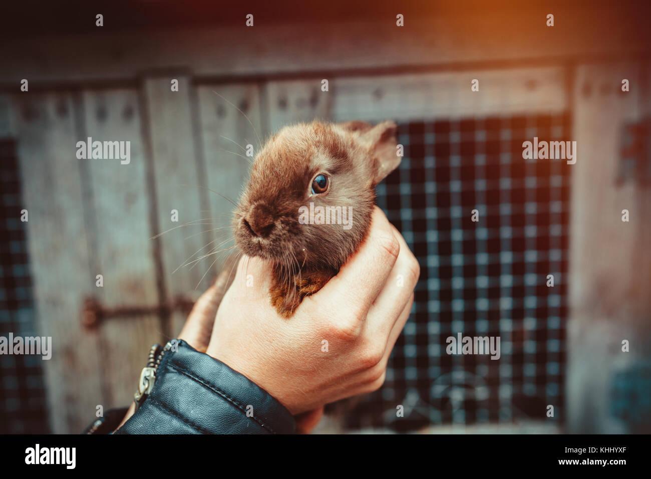 Baby bunny en la mano Imagen De Stock