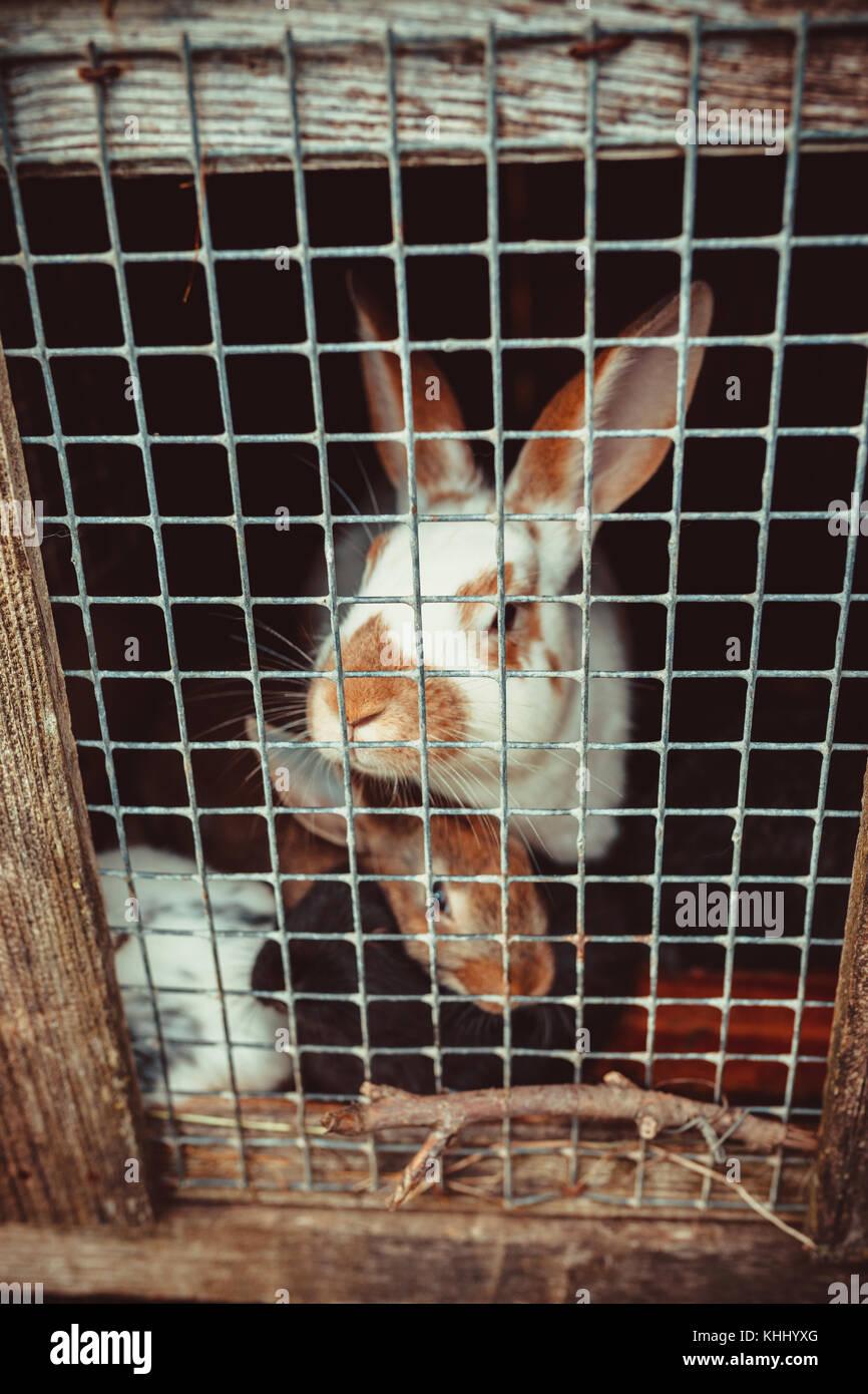 Conejitos en una jaula. Imagen De Stock