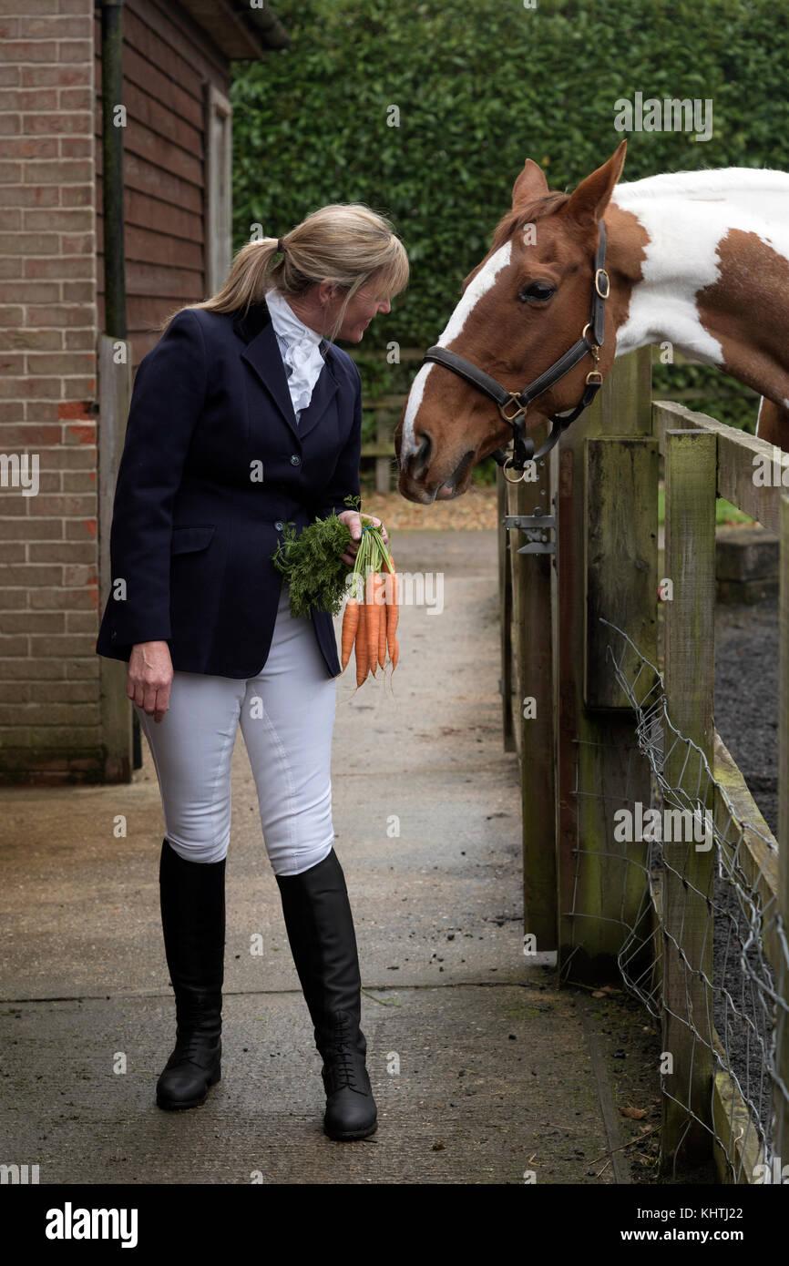 Bien vestido femenino rider sosteniendo un montón de zanahorias para tentar a su caballo skewbald Imagen De Stock