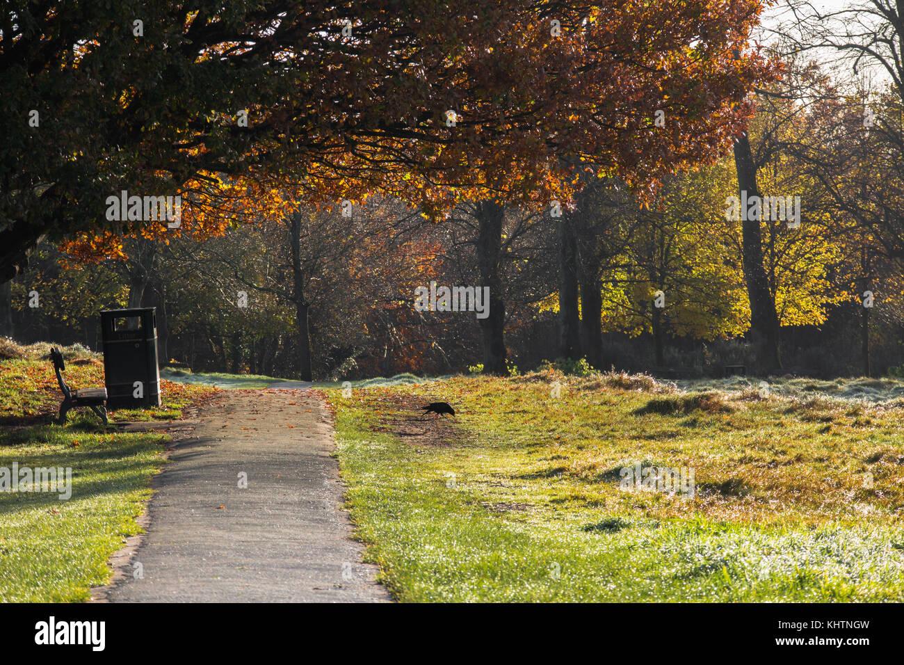 Royal Tunbridge Wells ;común amanecer temprano en una helada del amanecer en otoño invierno con banqueta Imagen De Stock