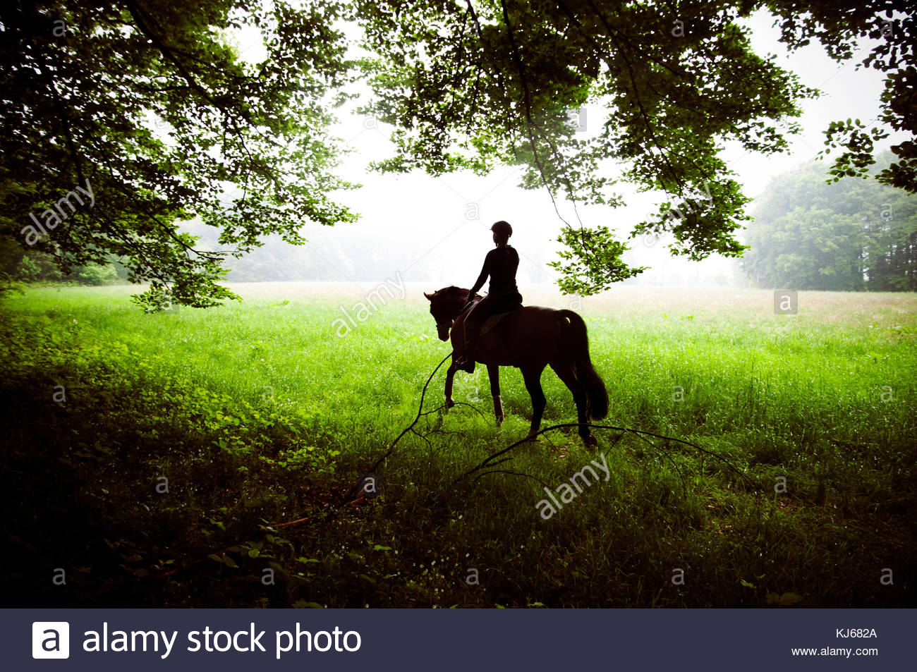Montar a caballo en el bosque Imagen De Stock