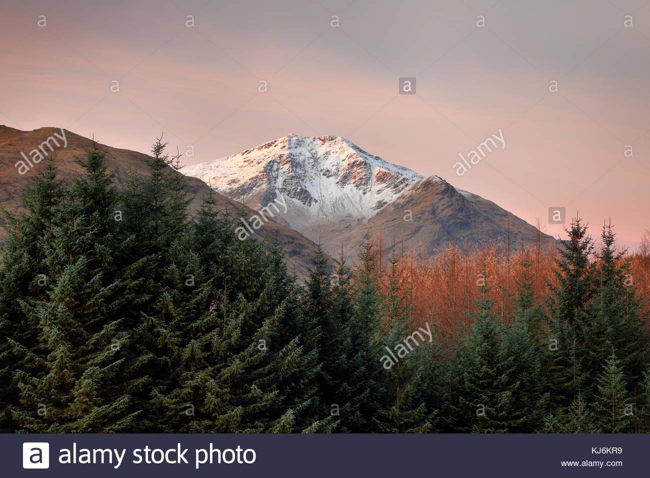 Los picos cubiertos de nieve de Ben Lui con árboles en primer plano durante un colorido Amanecer. Foto de stock