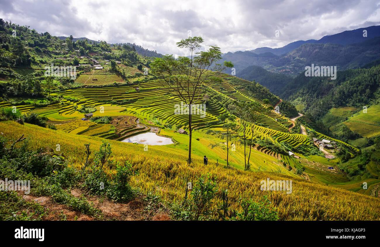 Campo De Arroz En Terrazas En El Norte De Vietnam Terrazas