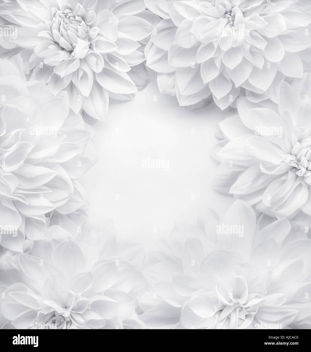 Fondo de marco flores blancas creativas , patrón floral o diseño de ...
