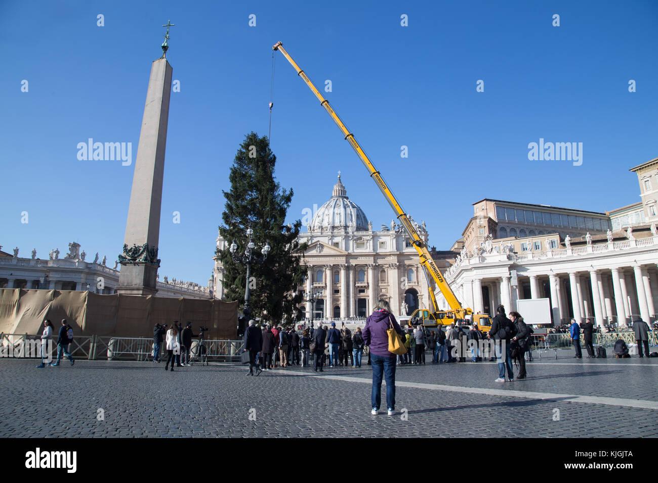 Roma, Italia. 23 Nov, 2017. El tradicional árbol de Navidad fue montado en el vaticano, que este año vinieron Imagen De Stock