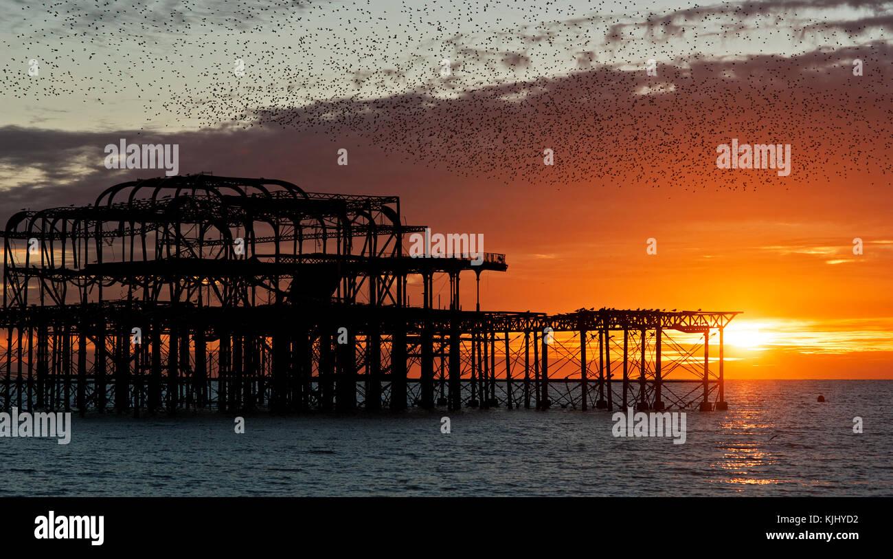 Murmuration sobre las ruinas del West Pier de Brighton, en la costa sur de Inglaterra. Una Bandada de estorninos Imagen De Stock