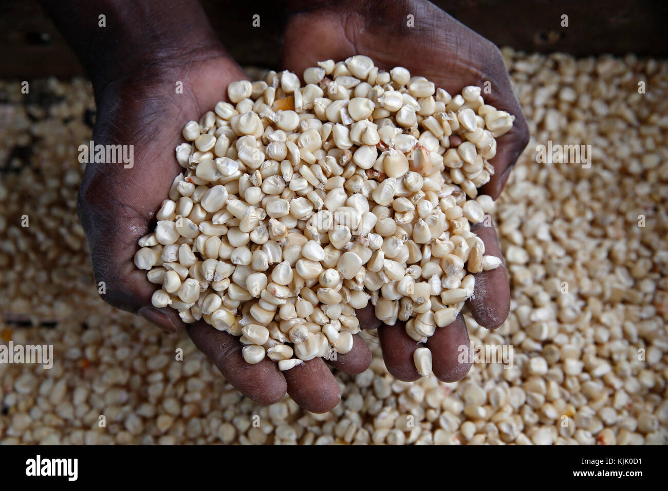 Ernest Abika compró un molino de maíz con un préstamo de 2 millones de UGS desde Uganda Kolping Society Imagen De Stock