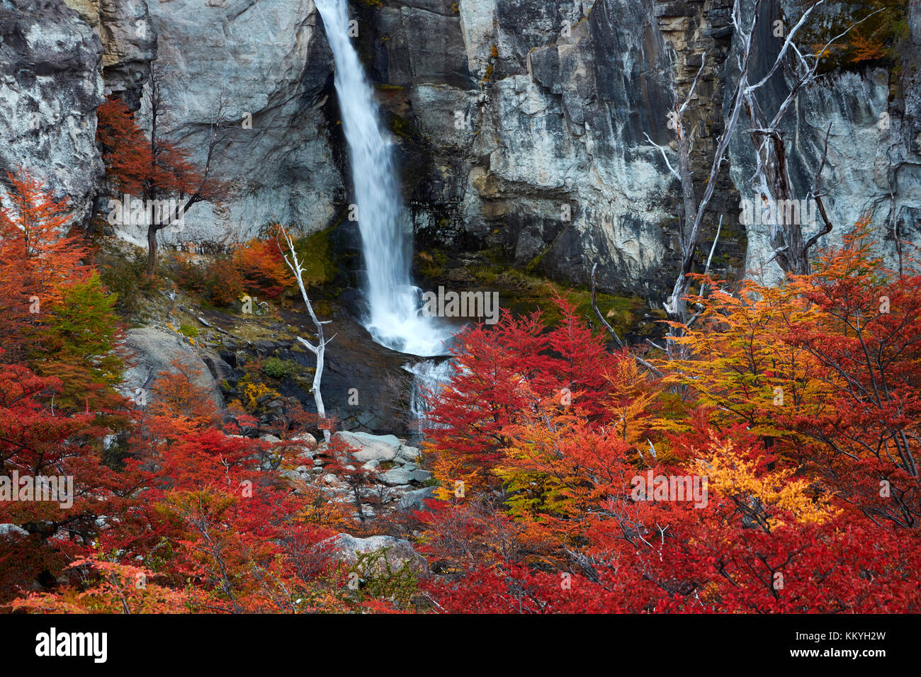 El Chorrillo cascada y lengas en otoño, cerca de El Chaltén, parque nacional Los Glaciares, Patagonia Imagen De Stock