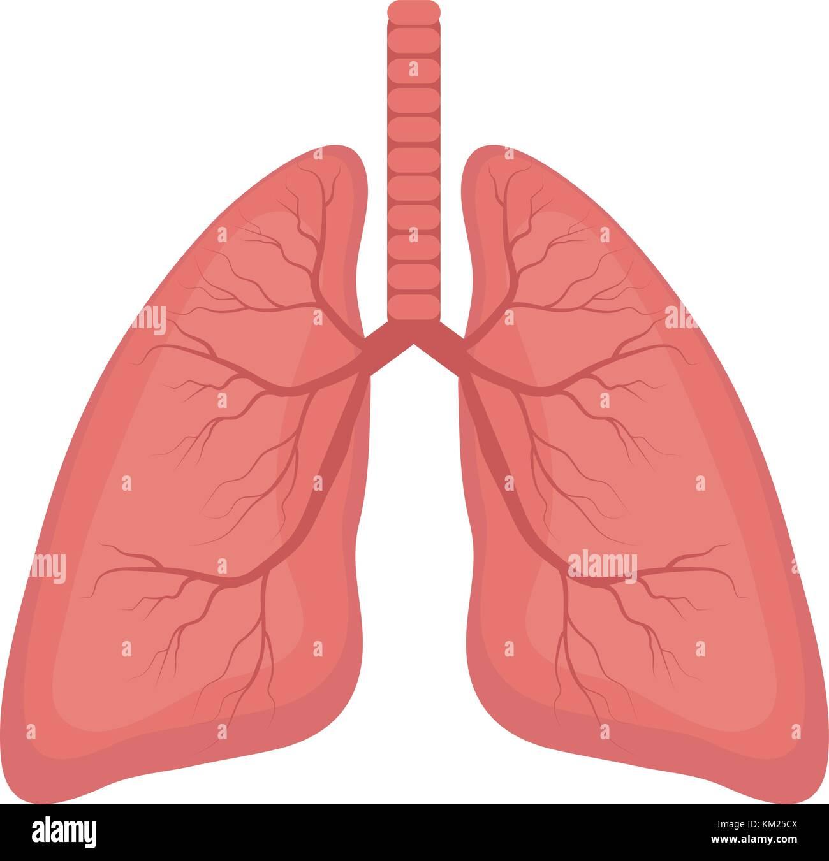 Los pulmones, icono de estilo plano. Los órganos internos del ...