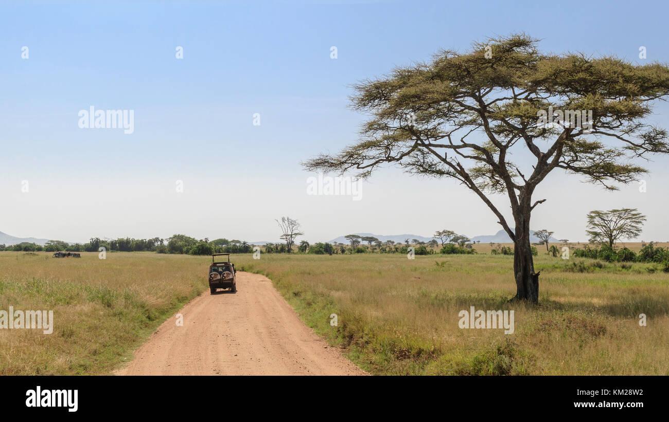 Jeep Safari en el Serengeti, Tanzania, África Foto de stock