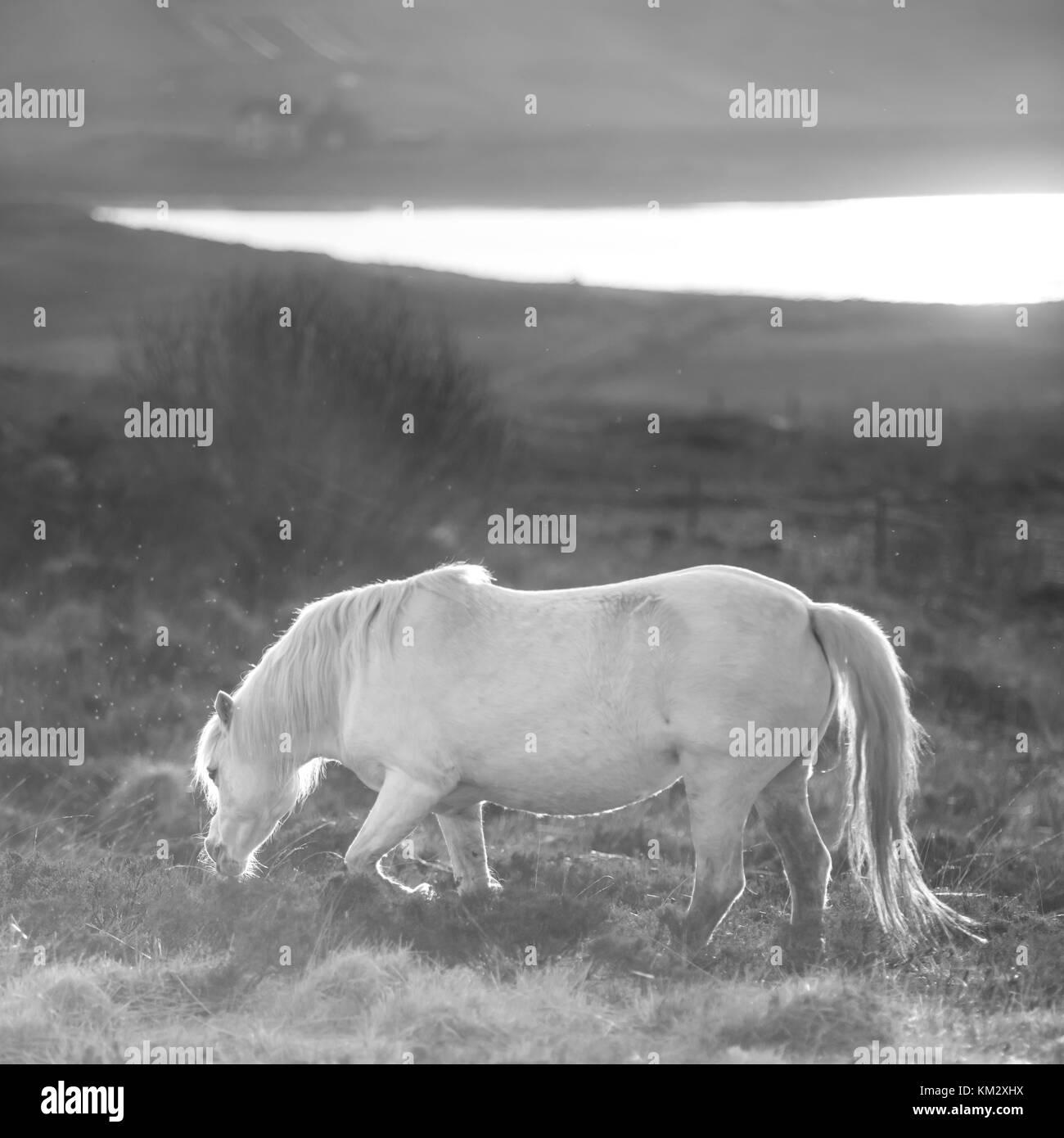 Caballo blanco - semental y atardecer paisaje andaluz Foto de stock
