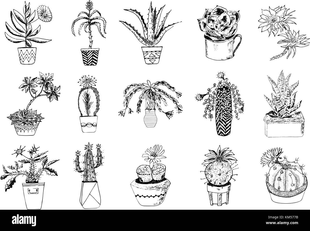 Resultado De Imagen Para Dibujos Para Pintar De Princesas: Resultado De Imagen De Dibujos De Cactus Tumblr Para Pintar