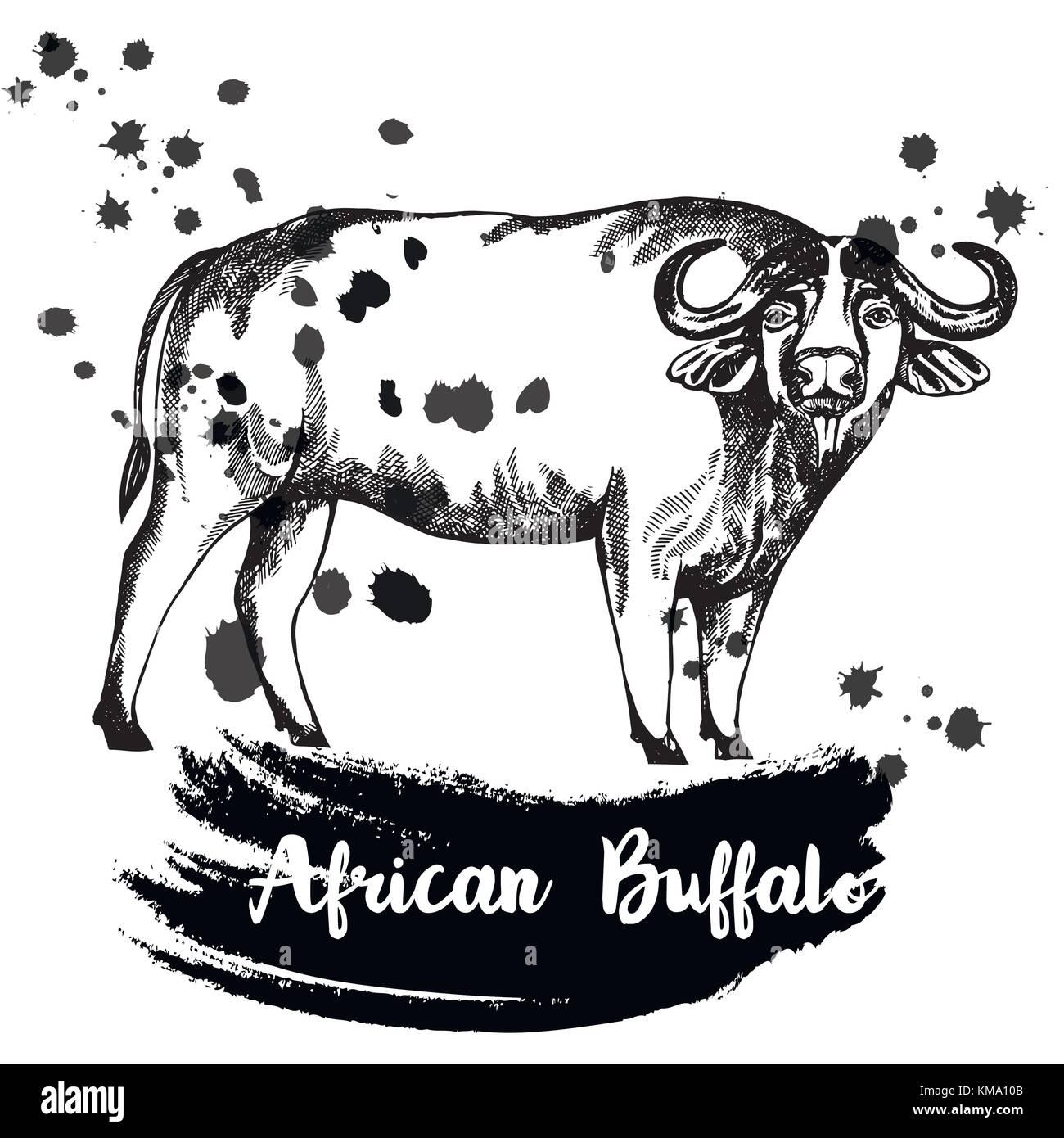 Buffalo Drawn Imágenes De Stock & Buffalo Drawn Fotos De Stock - Alamy