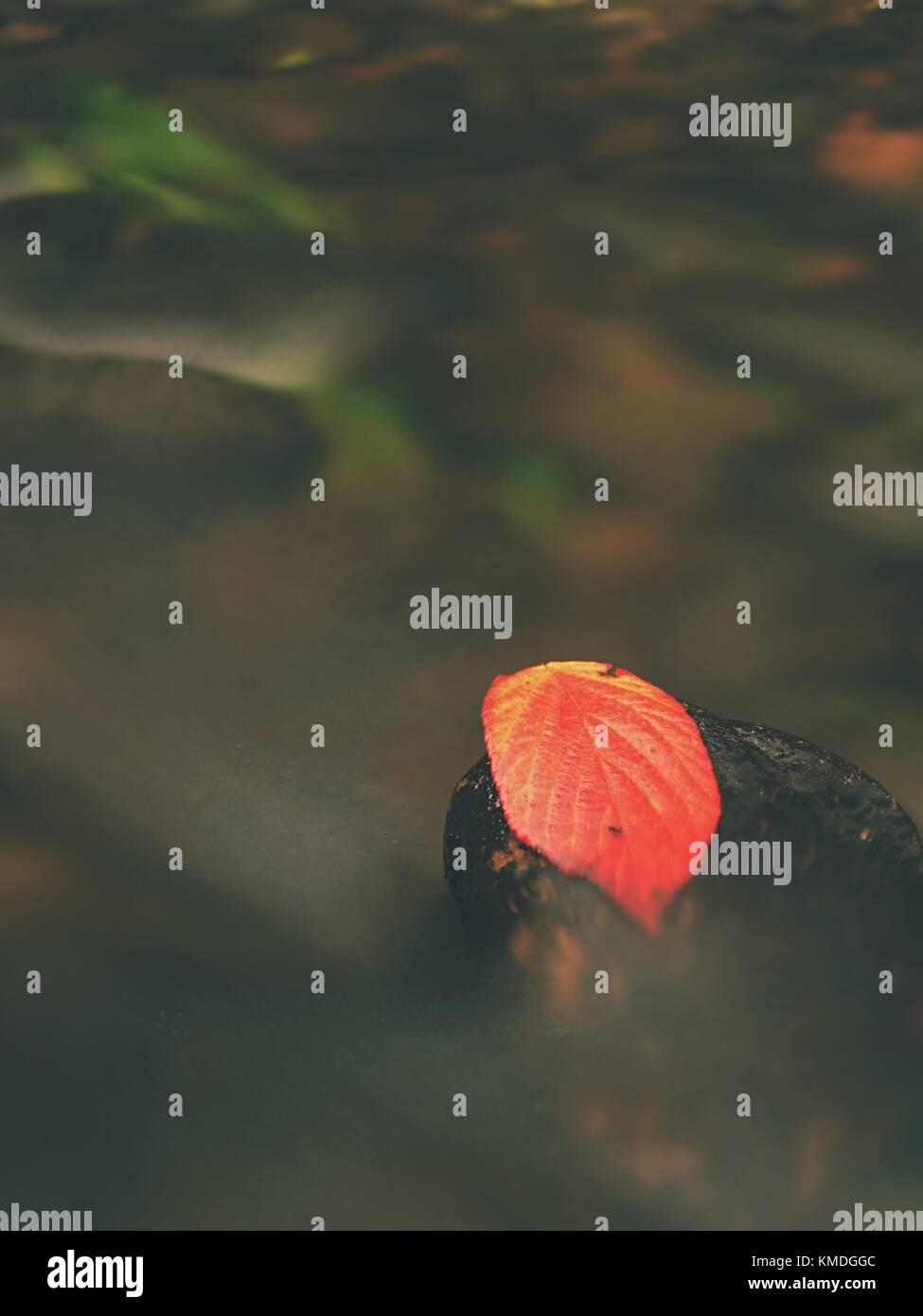 Hoja roja de la frambuesa roja rota Naranja hoja atrapados en la piedra negra en el stream rapids. plata líneas de burbujas en el agua fría se crea por largos exposu Foto de stock