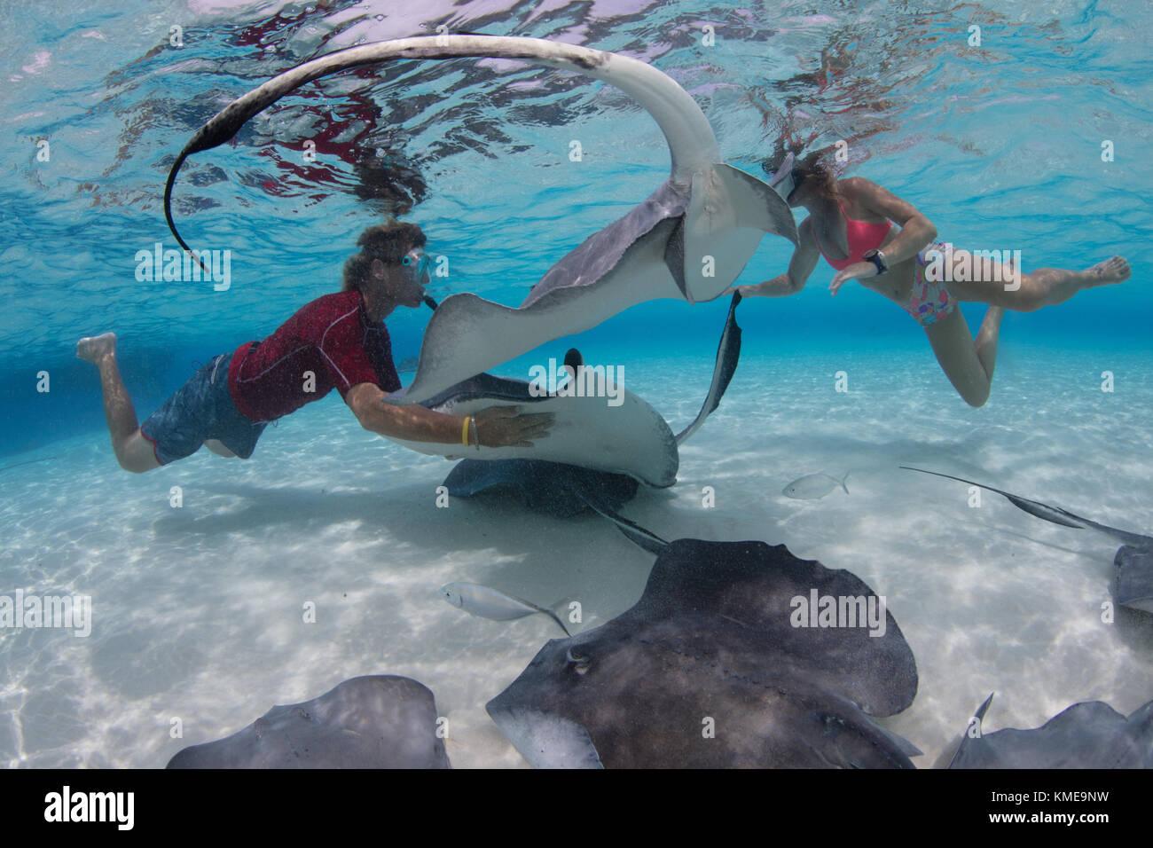 Los buceadores interactuar con manta rayas sureñas en la arena, Gran Caimán Foto de stock