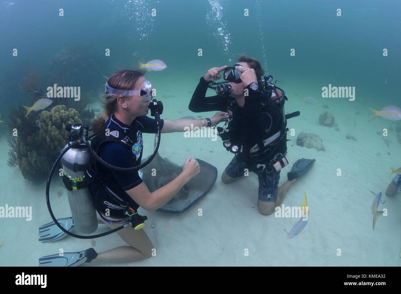 Los buceadores realizar borrado máscara habilidades en las aguas poco profundas de Stingray City, Gran Caimán Foto de stock
