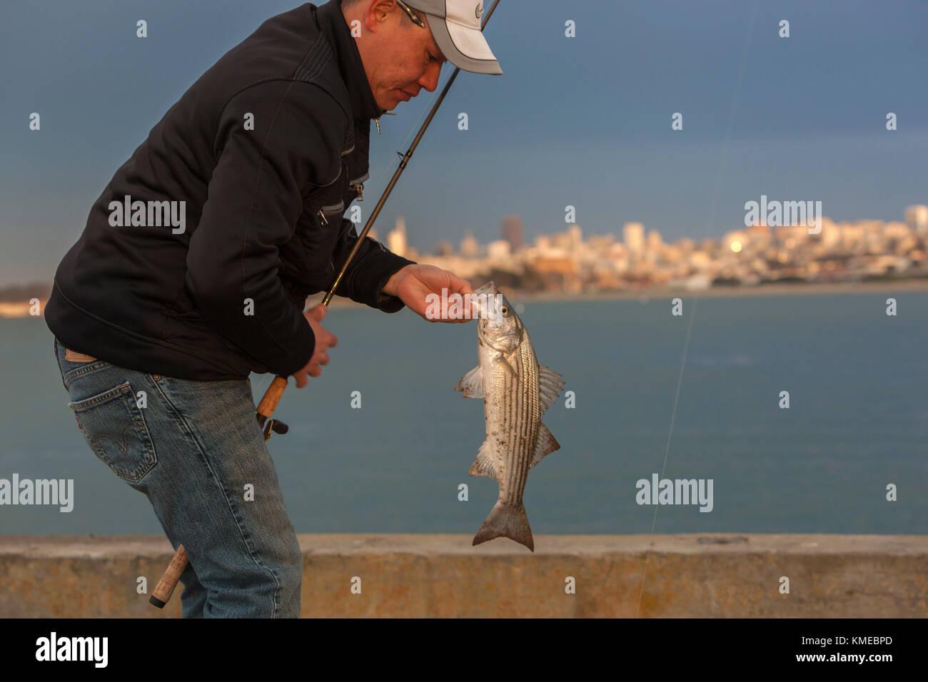 Pescador mantiene atrapada la lobina rayada (morone saxatilis), Golden Gate, el muelle de San Francisco, California, Imagen De Stock