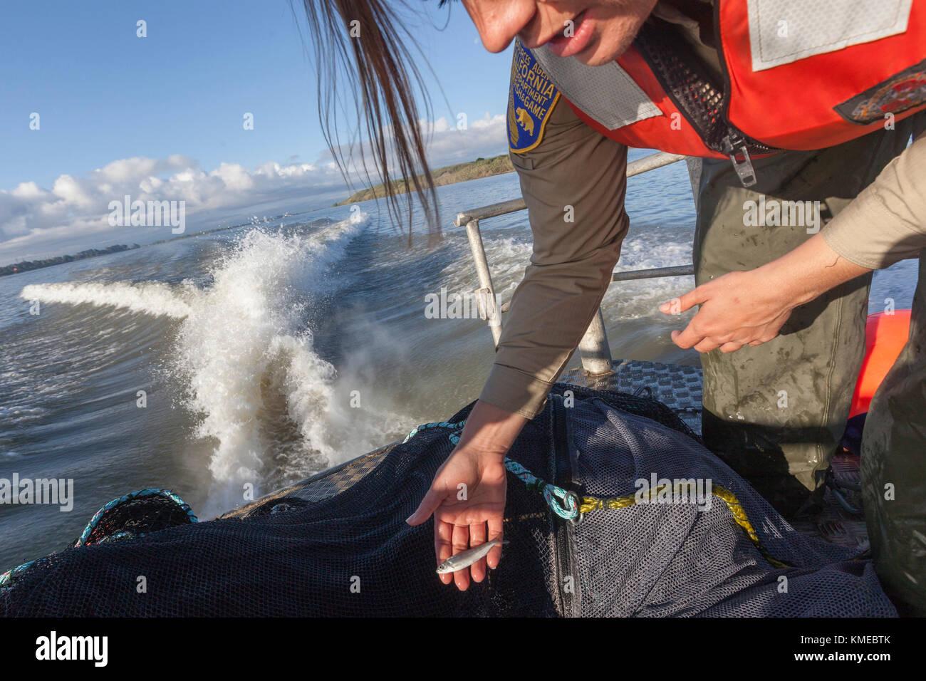 Científico medioambiental lauren damon de california departamento de peces y fauna silvestre, la realización Imagen De Stock