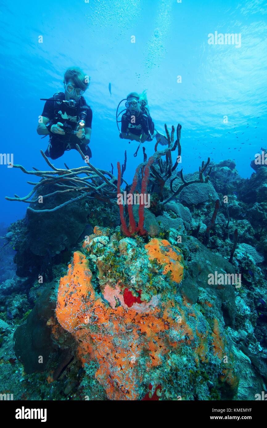 Los submarinistas exploran un arrecife en Gran Caimán. Foto de stock