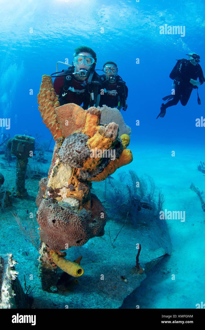 Los buceadores en los escombros del oro verde, gran caimán Foto de stock