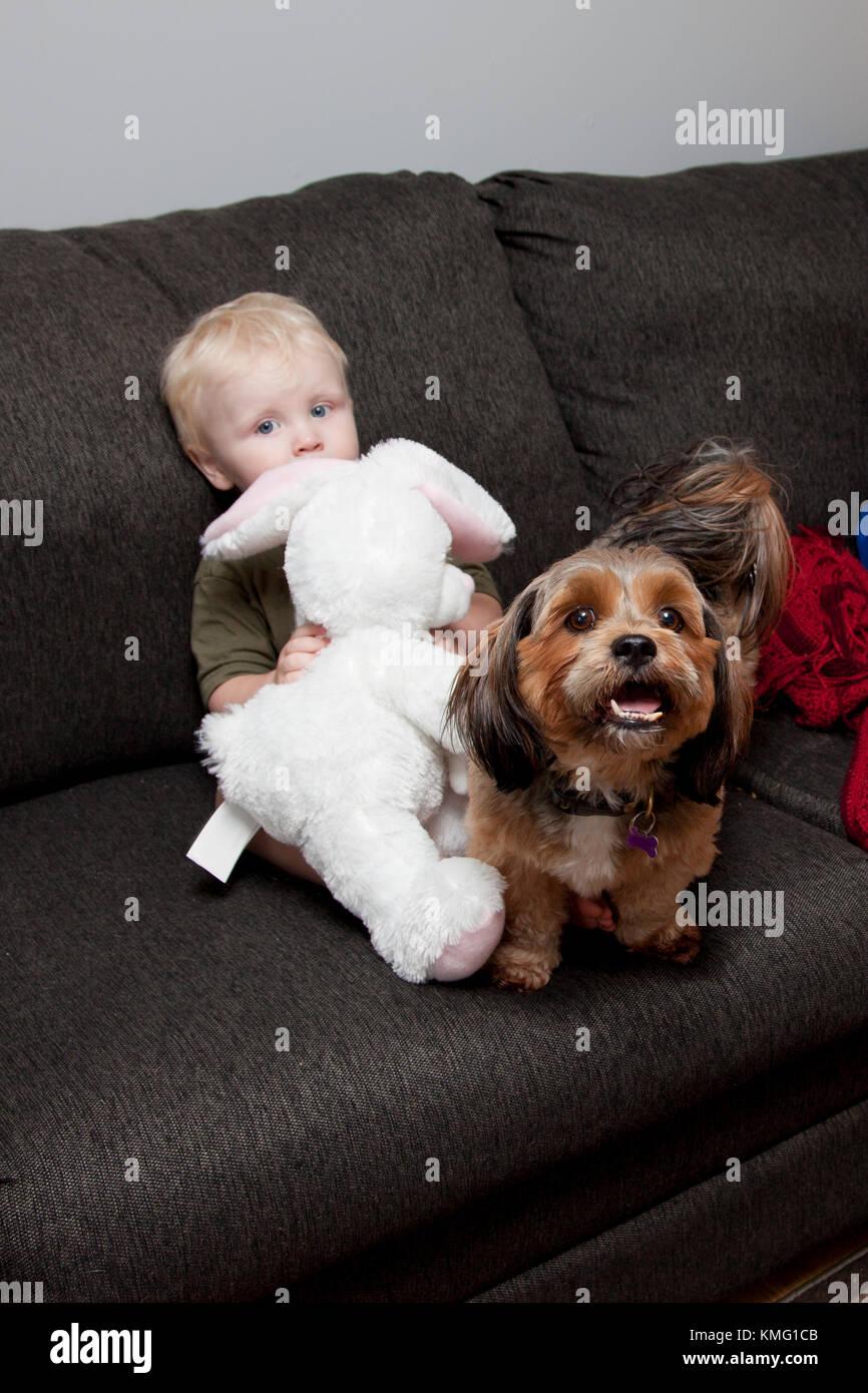 Cute little boy rubia esconde tímidamente en la cama detrás de un conejo de peluche con un perro mascota Imagen De Stock