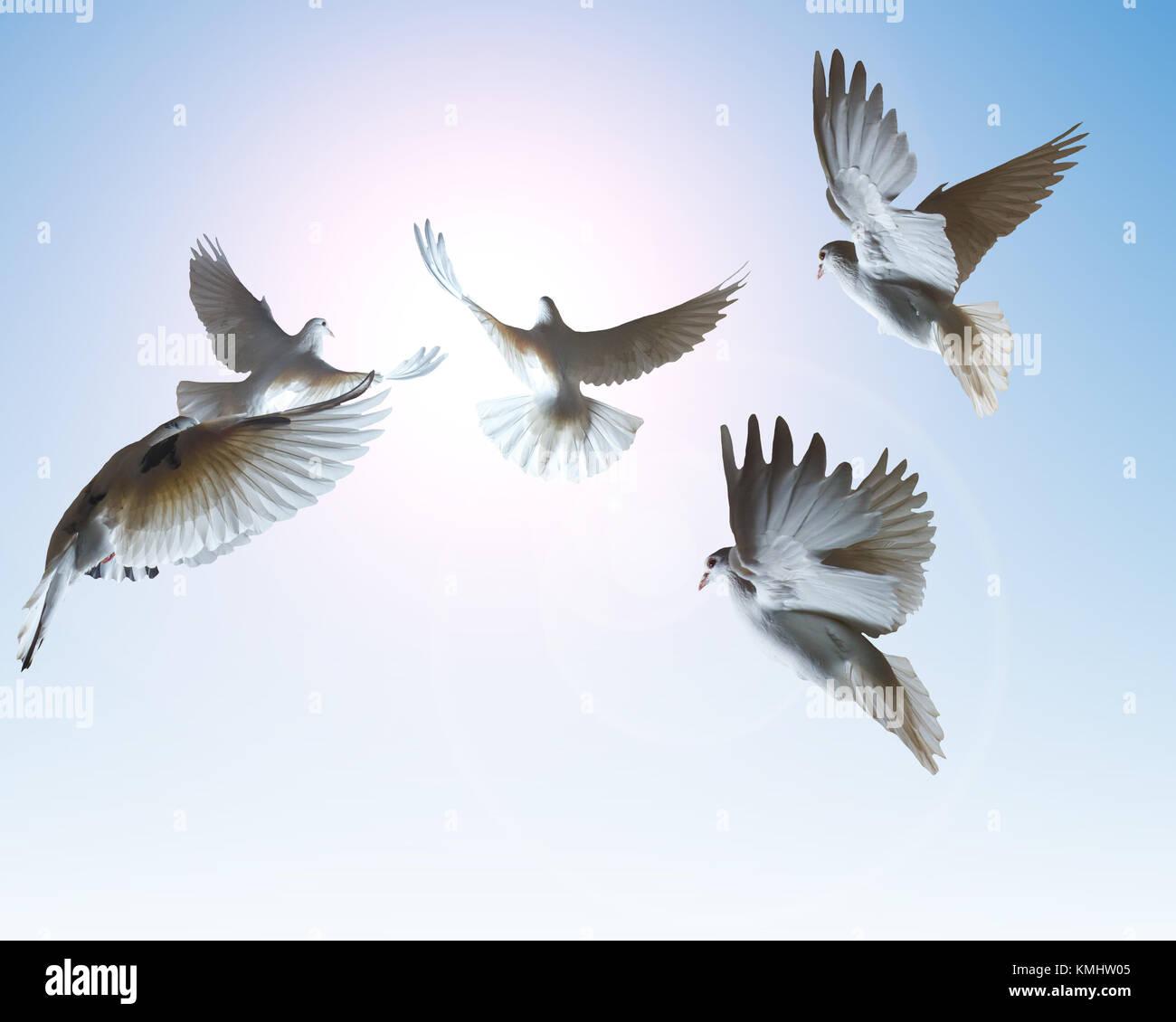 Un Rebaño De Paloma Blanca Volando En El Sol El Objeto Aislado El