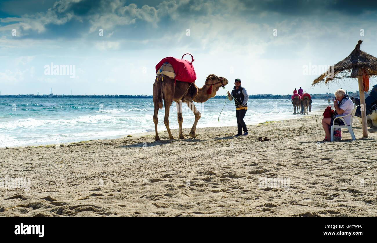 Los camellos en la playa en Djerba, 07 Nov 2014 Foto de stock