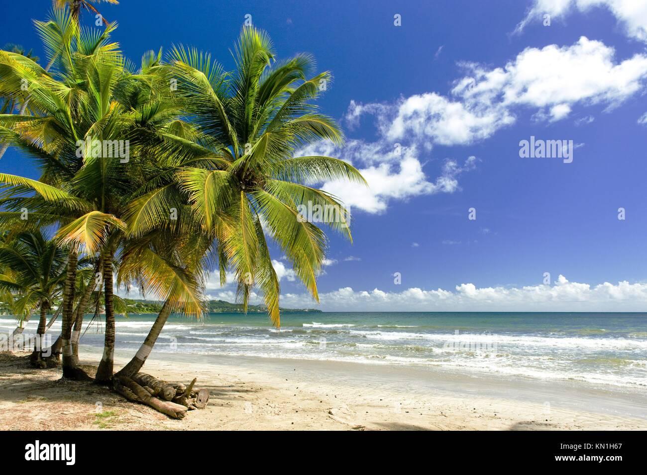 Rockly Bay, Tobago. Imagen De Stock