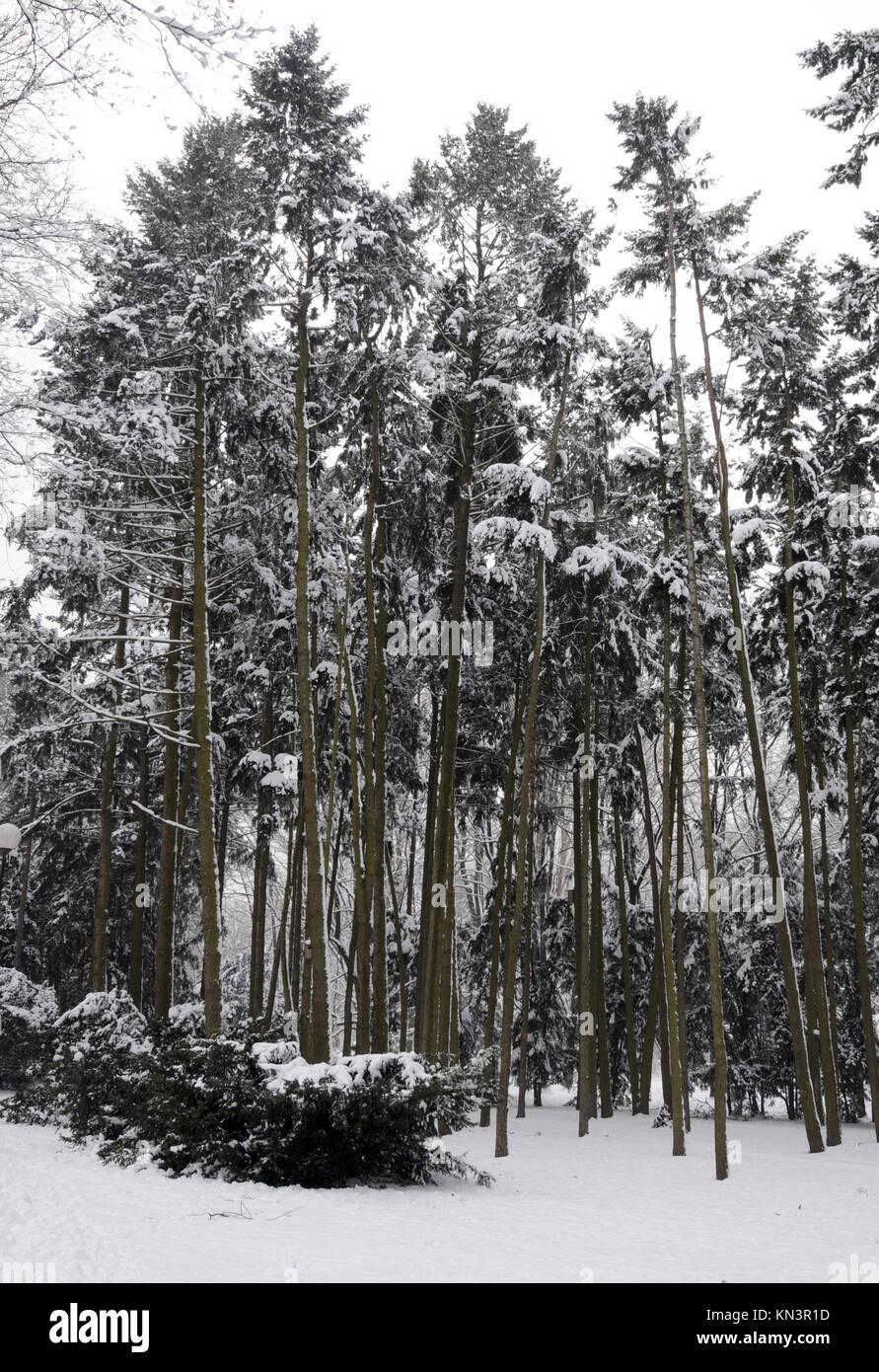 Los Árboles con nieve en coeverd park en Varsovia, Polonia. Imagen De Stock