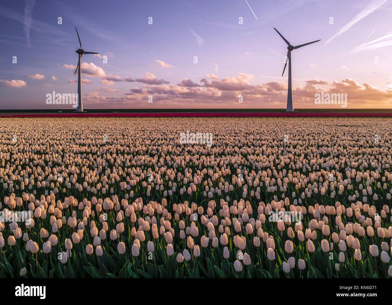 Molino de Viento Energía verde eléctrico Holanda Foto de stock