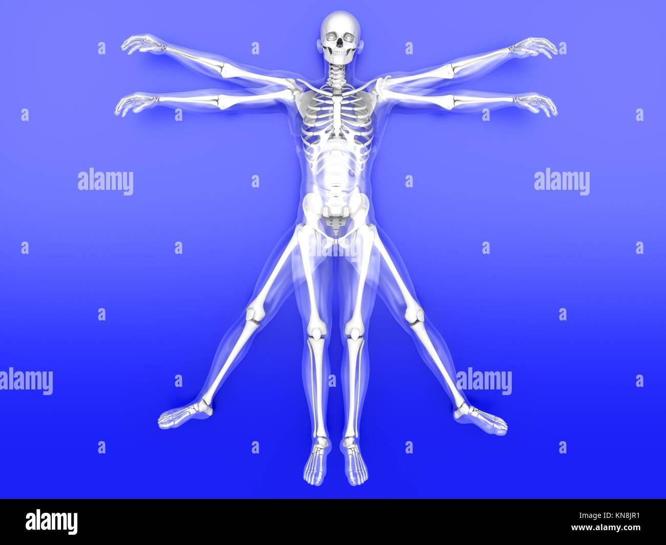 3D prestados interpretación del famoso Leonardo da Vinci sketch. Imagen De Stock
