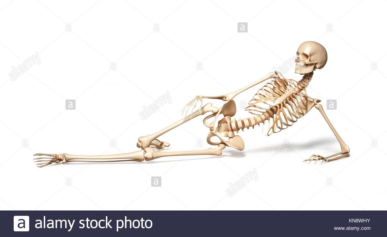 Esqueleto de mujer humana tumbado en el suelo. Sobre un fondo blanco. Trazado de recorte incluido. Imagen De Stock