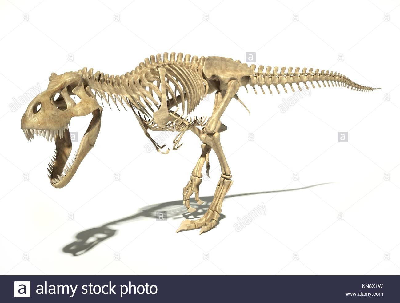 T-Rex dinosaurio foto-realistas y científicamente correcta, completa ...