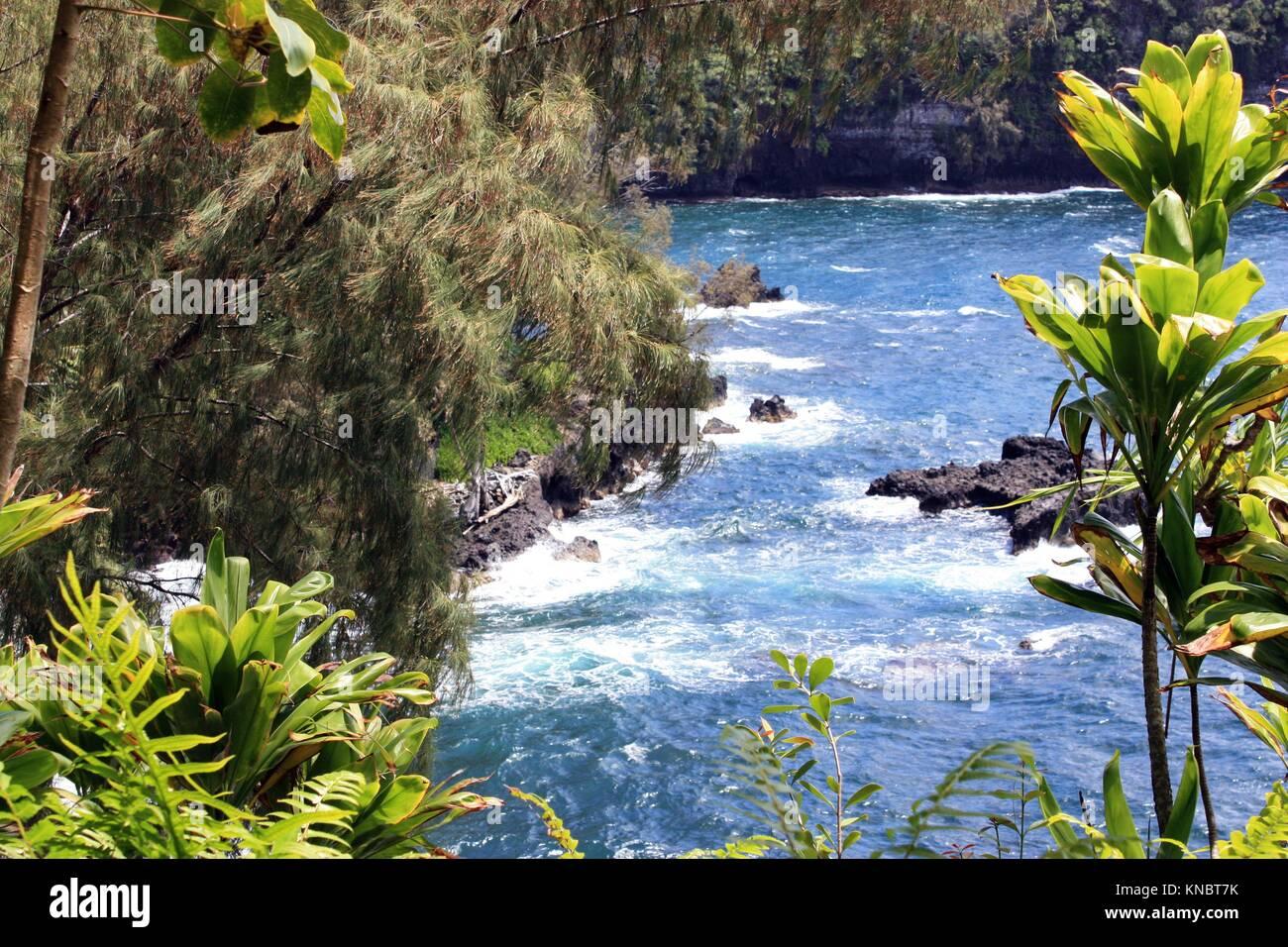 Mirar a través de pinos y árboles de yuca y helechos hasta el Océano Pacífico en la Bahía Onomea en Papaikou, Hawai. Foto de stock