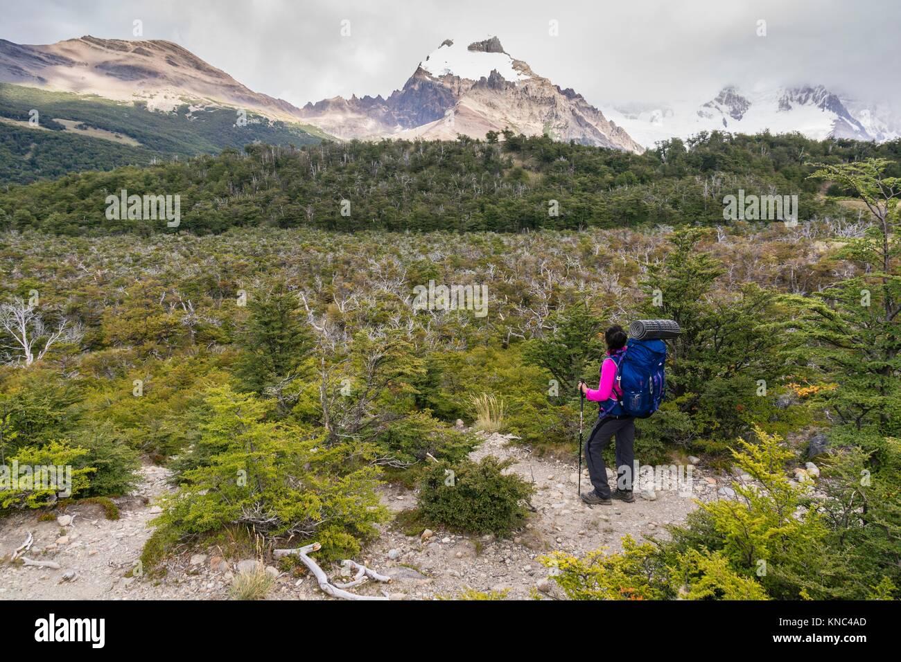 Senda de las lagunas Madre e hija, el parque nacional Los Glaciares, Patagonia, Argentina. Imagen De Stock