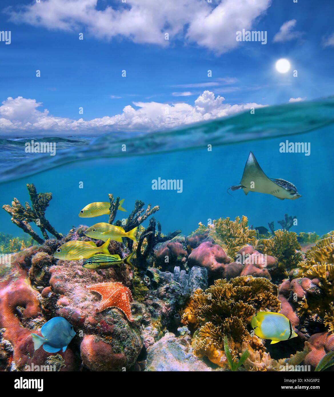 Seascape por encima y por debajo de la superficie del mar nublado cielo azul y coloridos arrecifes de coral con vida marina tropical bajo el agua, mar Caribe Foto de stock